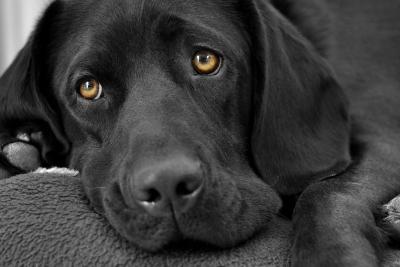 ВКрыму возбуждено уголовное дело против живодёров, пытавшихся убить исъесть собаку
